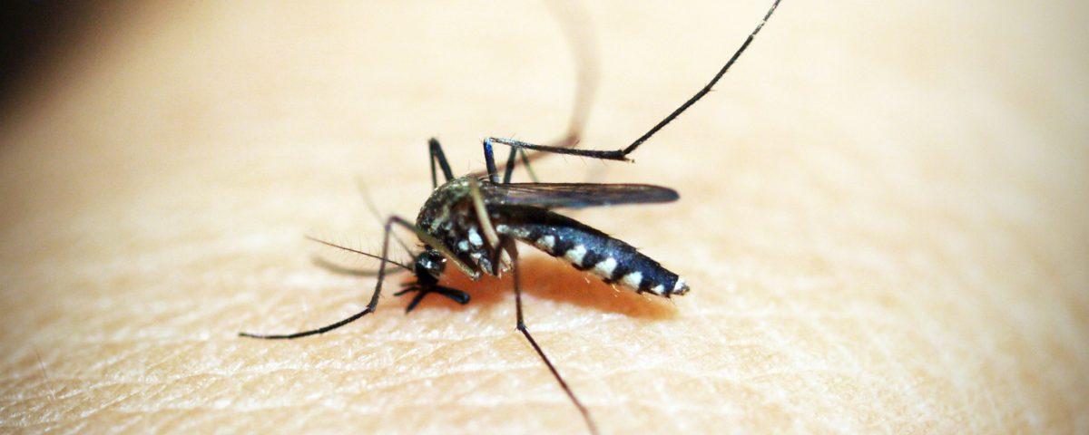 Como evitar Picaduras de Mosquito